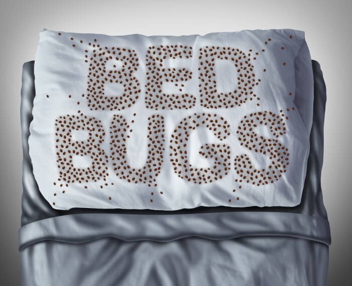 Commercial Bed Bugs