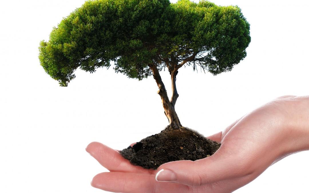 Commercial Tree & Shrub