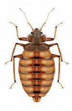 Kill bed bugs NJ NYC Manhattan Brooklyn Staten Island Queens Bronx NY, bed bug heat Manhattan NJ NYC Brooklyn Staten Island Queens Bronx NY