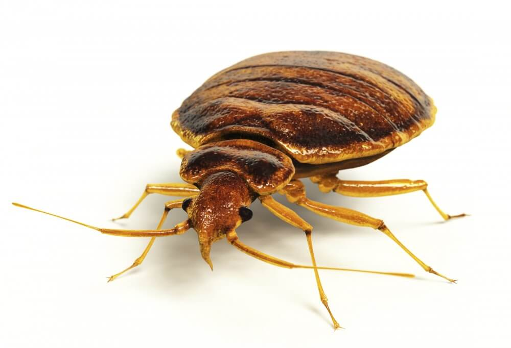 KILL Bed Bugs NJ, Non-toxic bed bug treatment NJ, bed bug treatment NJ, bed bug heat NJ, hypoallergenic bed bug treatments NJ, bed bug heat treatment NJ