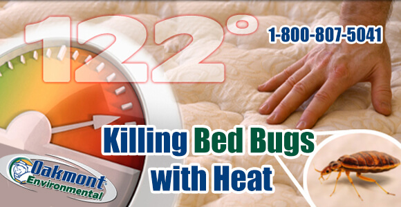Bed Bug Control NJ, Bed Bug Control, How to Get Rid of Bed Bugs NJ