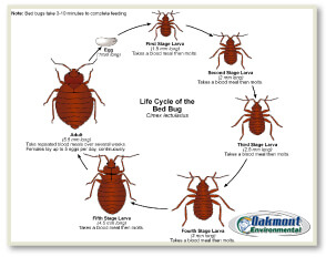 How to get rid of NJ bed bugs, How to get rid of bed bugs