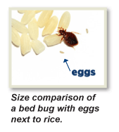 heat kills bed bug eggs, Bed Bug Treatment NJ