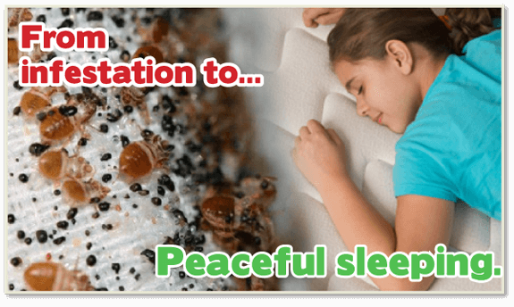 safe bed bug heat, bed bug control, bed bug heat treatment, bed bug bites, Kill bed bugs NJ, Kill bed bugs, nontoxic bed bug treatment, non-toxic bed bug treatment, non toxic bed bug treatment NJ
